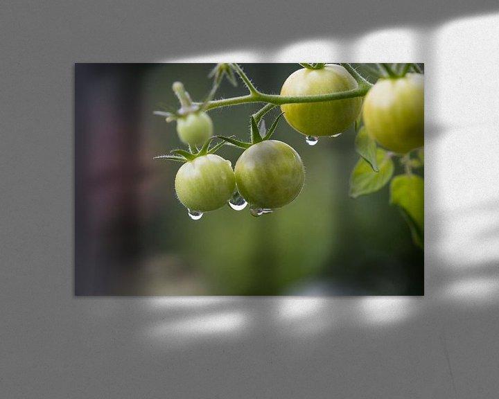 Beispiel: Unreife Mini-Tomaten hängen im Biogarten am Paradeiser-Strauch. von Rudolf Brandstätter