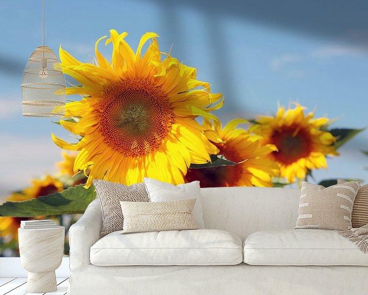Beispiel fototapete: Die Pracht der Sonnenblumen von Rudolf Brandstätter