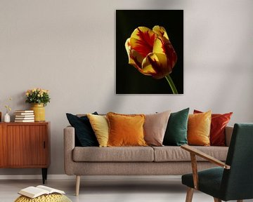 tulp flame 3 von Jonathan Kremer