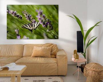 Ein Schmetterling auf Lavendel von Kelvin Middelink