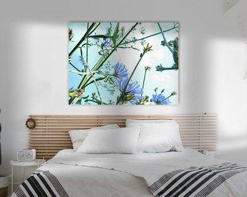 Kornblumenblau von Anita Snik-Broeken