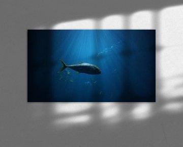 Fische von Lieke Elsinga