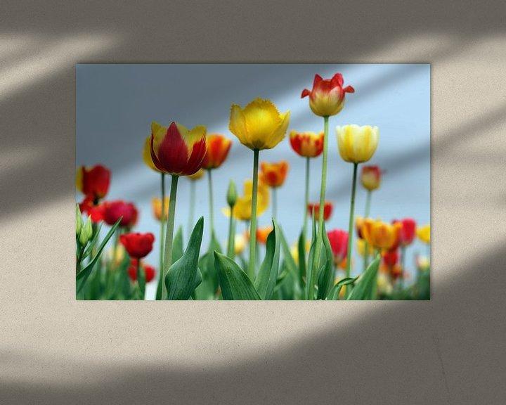 Sfeerimpressie: gele tulpen van Renate Knapp