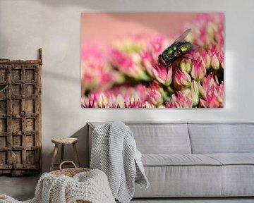 Eine Fliege auf einer Pflanze von Gerard de Zwaan