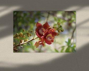 Blume von mathieu van wezel