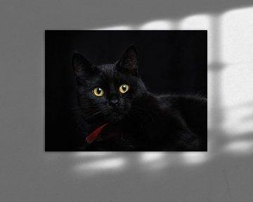 Le chat noir von Lex Schulte