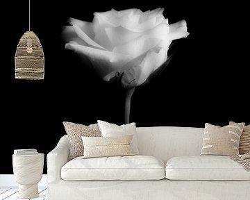 witte roos van Peter Baak