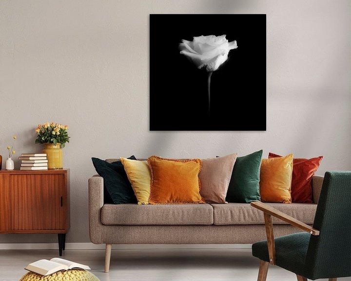 Sfeerimpressie: witte roos van Peter Baak