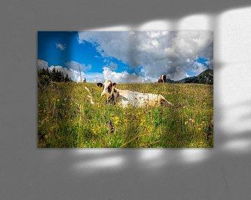 Gefleckte Kuh auf einer blumenreichen Wiese in den italienischen Dolomiten von Wout Kok