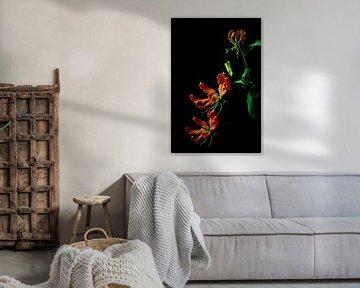 Blume Gloriosa von Leonie van den Udenhout