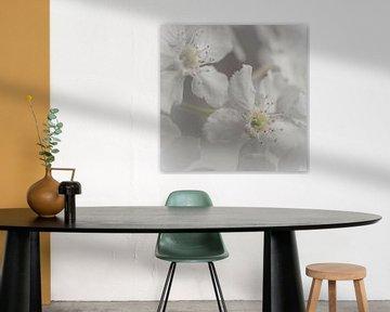 Dromerige witte bloesem von arjan doornbos