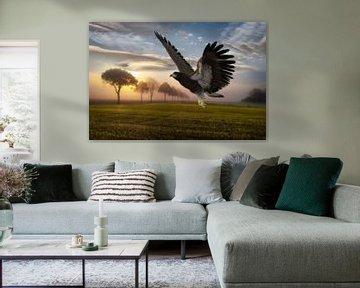 aigle dans le paysage hs