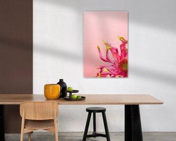 Blume von simone swart