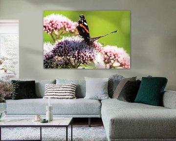 Schmetterlinge von Flevoland von Berend Kok