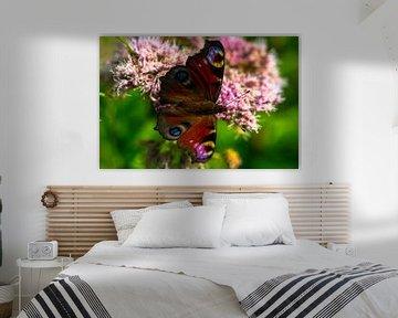 Schmetterlinge von Flevoland. von Berend Kok