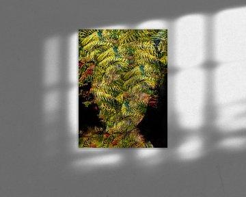 The fern von Gabi Hampe