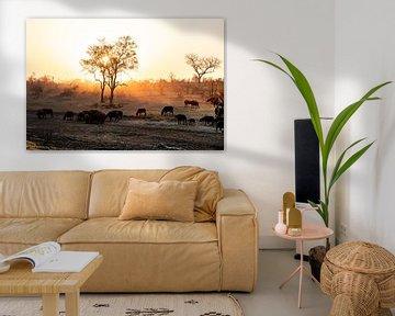 Der Sonnenuntergang in den afrikanischen Wildparks von Ineke Huizing