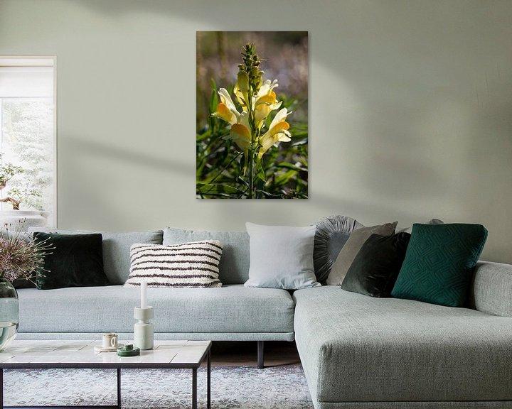 Beispiel: Wildblume; Linaria dalmatica von Anjo ten Kate