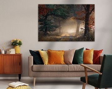 Début de l'automne dans une forêt brumeuse sur Rob Visser