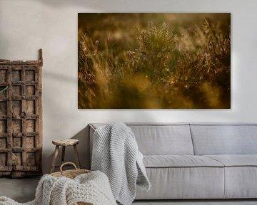 Heide im frühen Morgenlicht von Michel Knikker