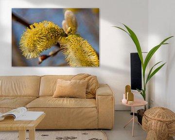 Blühendes Weidenkätzchen mit Pollen von Ester Ammerlaan