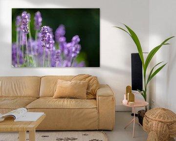 Lavendel in Blütezeit von Ester Ammerlaan