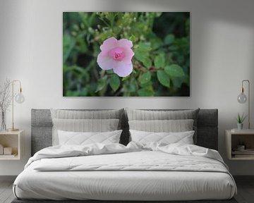 Blume in den Dünen von Debby Frijn