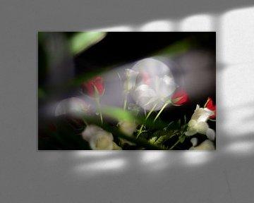 Rote und weiße Rosen von Marianna Pobedimova