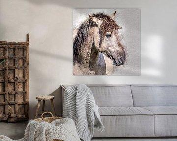 Porträt eines schönen konik pferd von Fotografie Jeronimo