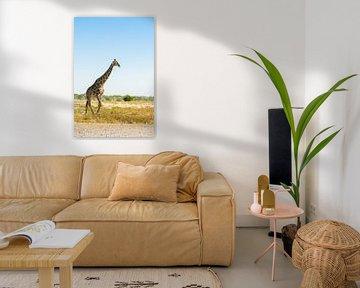 girafe et profil en Namibie sur Kirstin Kraaijveld