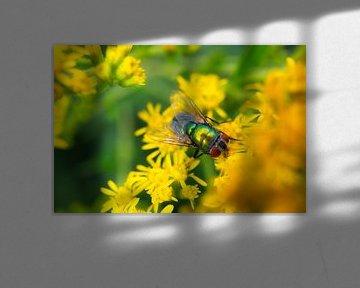 Fliege von Dagmar Marina