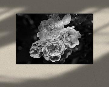 Rosen in schwarz-weiß von Gerard de Zwaan