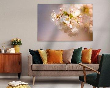 Nahaufnahme der Sakura, Kirschblüte. von Erik de Rijk