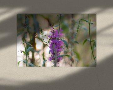 violette Weichheit von Tania Perneel