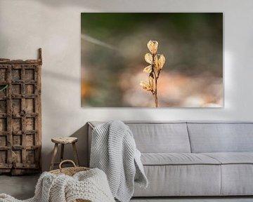 Trockenwaldpflanze von Tania Perneel