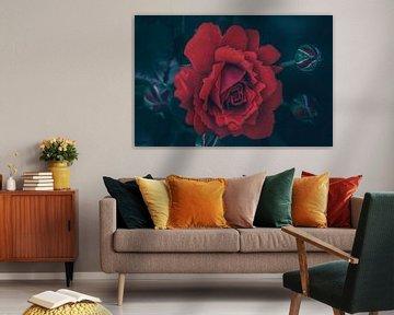 Rode schoonheid van Steffen Gierok
