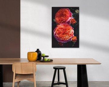 Rosenblüte von Steffen Gierok