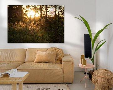 goldenes Licht durch die Bäume von Tania Perneel