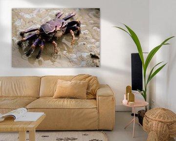 Krabbe von Kim de Groot