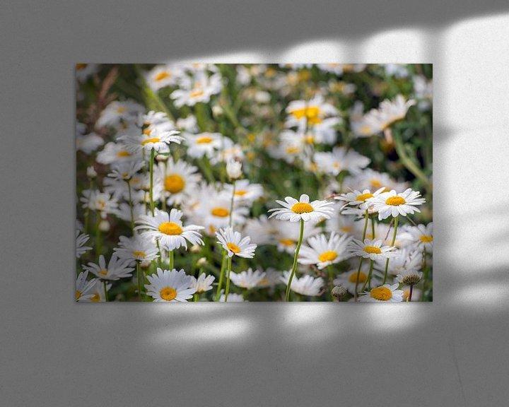 Sfeerimpressie: Wilde margrieten van dichtbij van Ruud Morijn