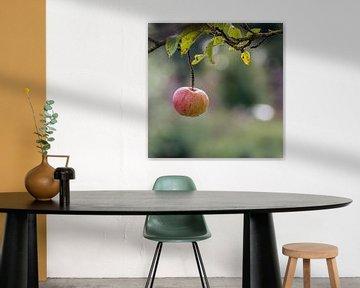Laatste appel aan tak appelboom