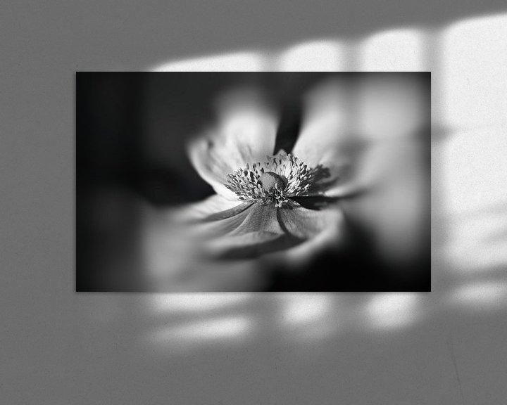 Sfeerimpressie: Anemoon in zwart wit van Leo Langen