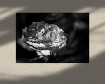 Roos in zwart wit. van Leo Langen