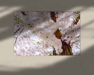 Blütezeit von Deborah Zannini