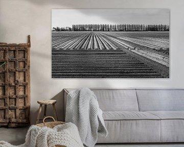 Kartoffelreihen in einer niederländischen Landschaft von Ruud Morijn