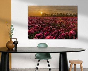 Sonnenuntergang an den Tulpen. von Erik de Rijk