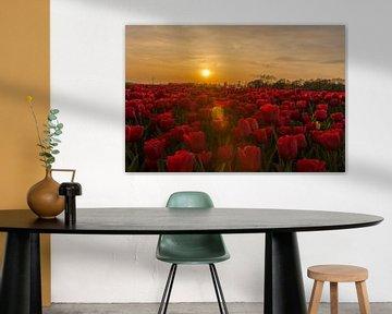 Gelbe Tulpe im roten Tulpenfeld bei Sonnenuntergang. von Erik de Rijk
