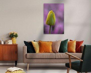 Gelbe Tulpe mit violettem Hintergrund. von Erik de Rijk