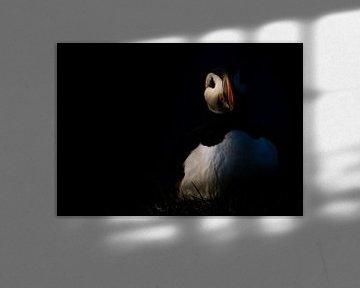 Papageientaucher bei Sonnenuntergang von Claudia van Zanten