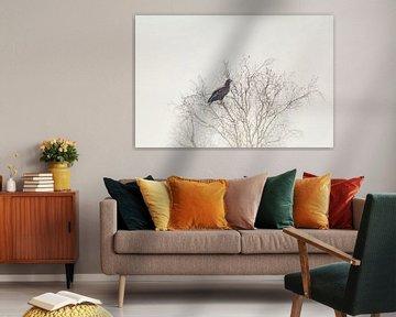 Seeadler auf dem Baum von Tobias Luxberg